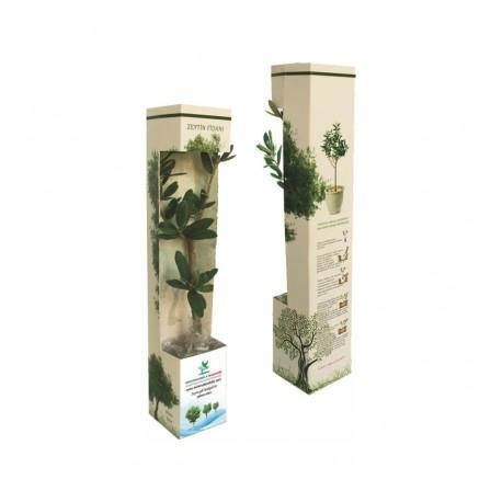 Canlı Ağaç Fidanı 03 (Karton Kutu)